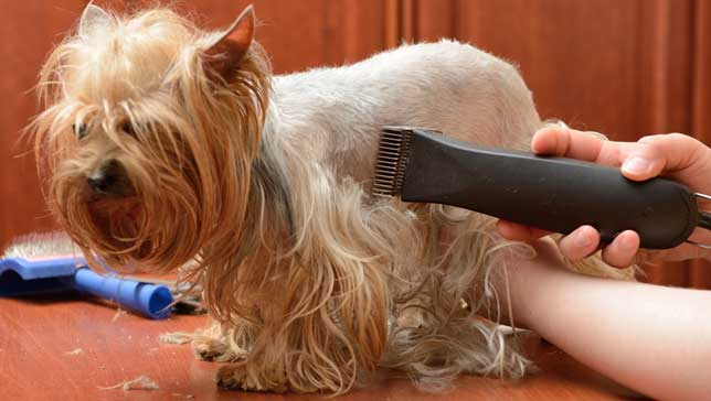 To shave or not to shave your pet ?