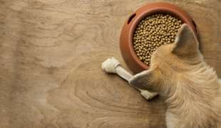 Dog Feed Ingredients You MUST Look Out For!