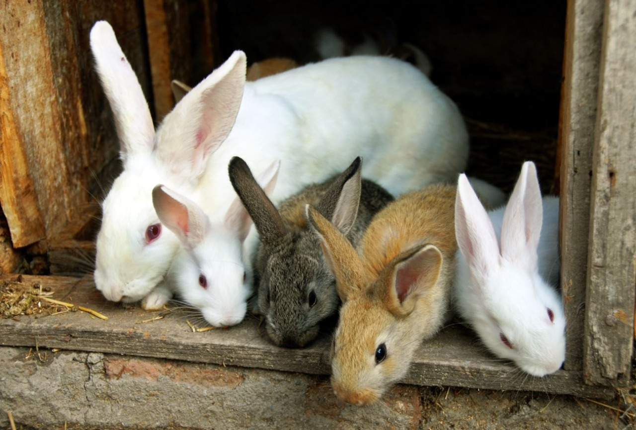 Thinking of Getting a Pet Rabbit? Here's Everything You Need to Know!