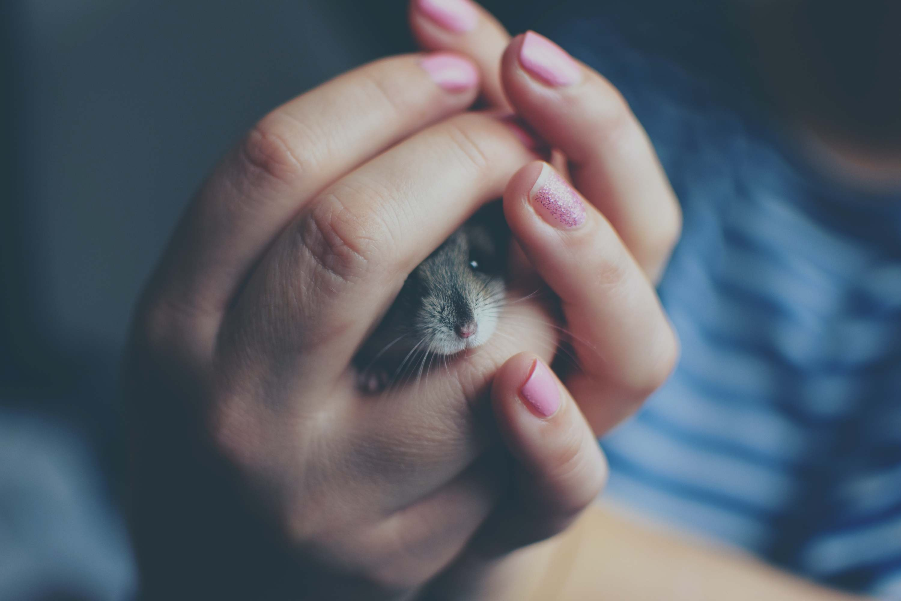 Here's How to Take Care of a Hamster as a Pet