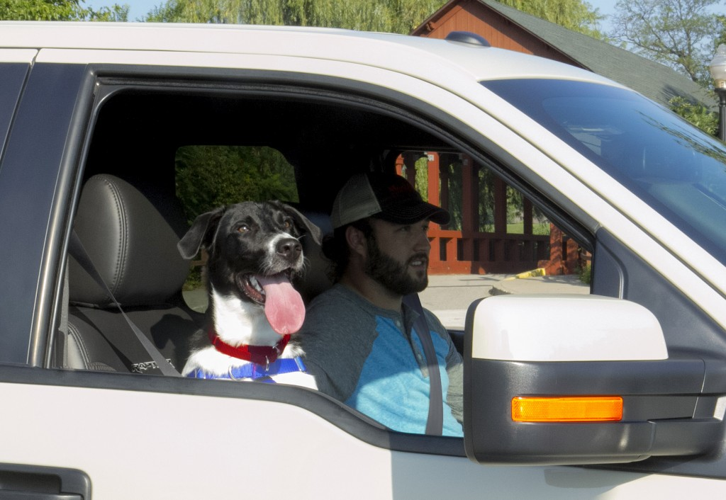 GROOMING & LIFESTYLE - TIPS TO GET YOUR PET WEEKEND TRAVEL-READY
