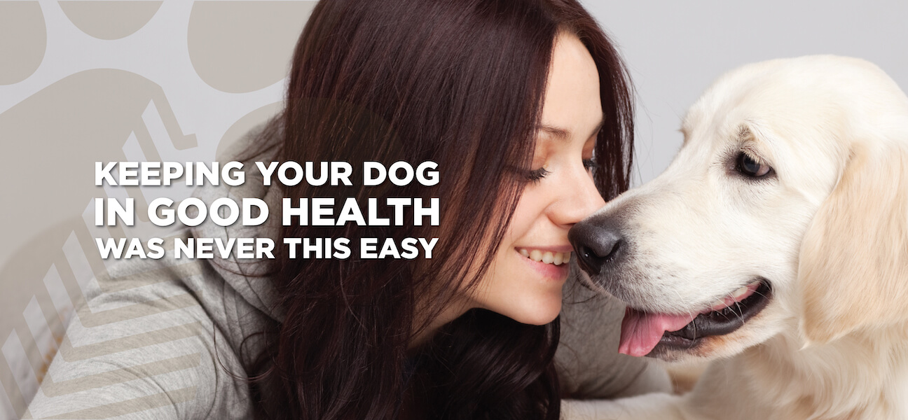 dog good health